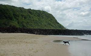 Dog running on beach next to headland on Tallebudgera Dog Beach Palm Beach North