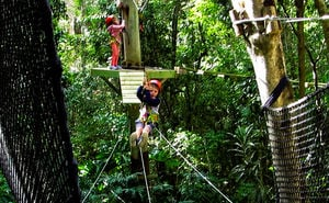 The TreeTop Challenge Juniors Tamborine Mountain